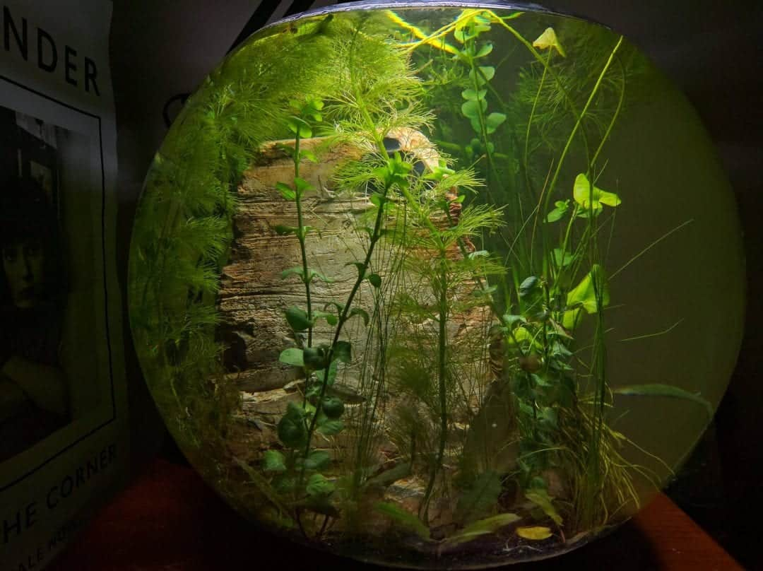 Are Jarrariums really self-sustaining?