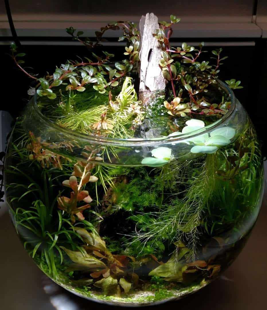 How to Create a Jarrarium