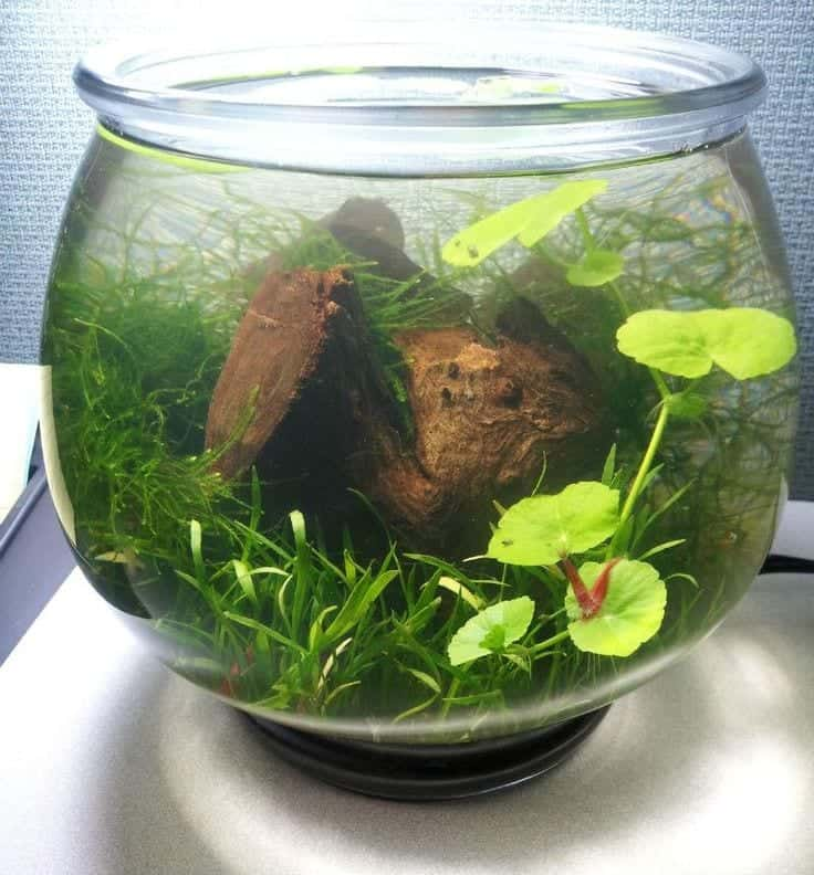 Aquascape in Jarrariums