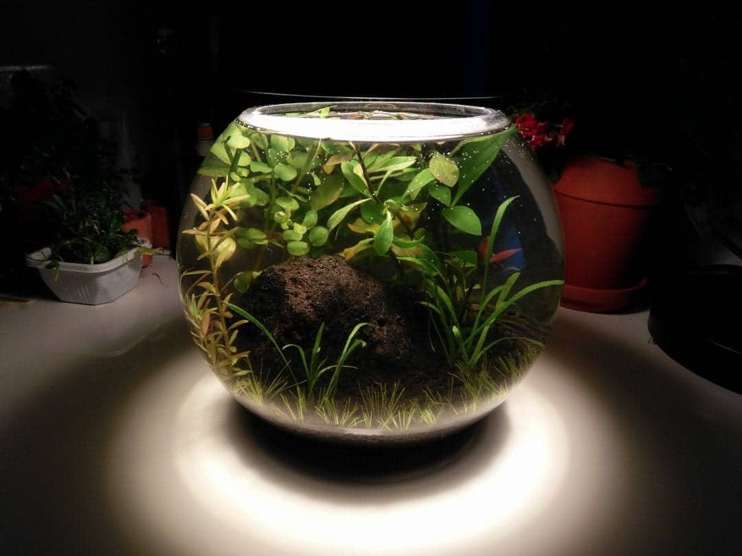 Cycling your Jarrarium