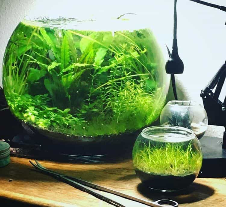 Choosing Jarrarium Plants
