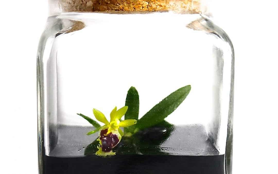 Bloomify Orchid Terrarium