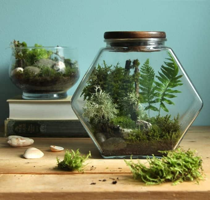 sealed vs unsealed terrarium