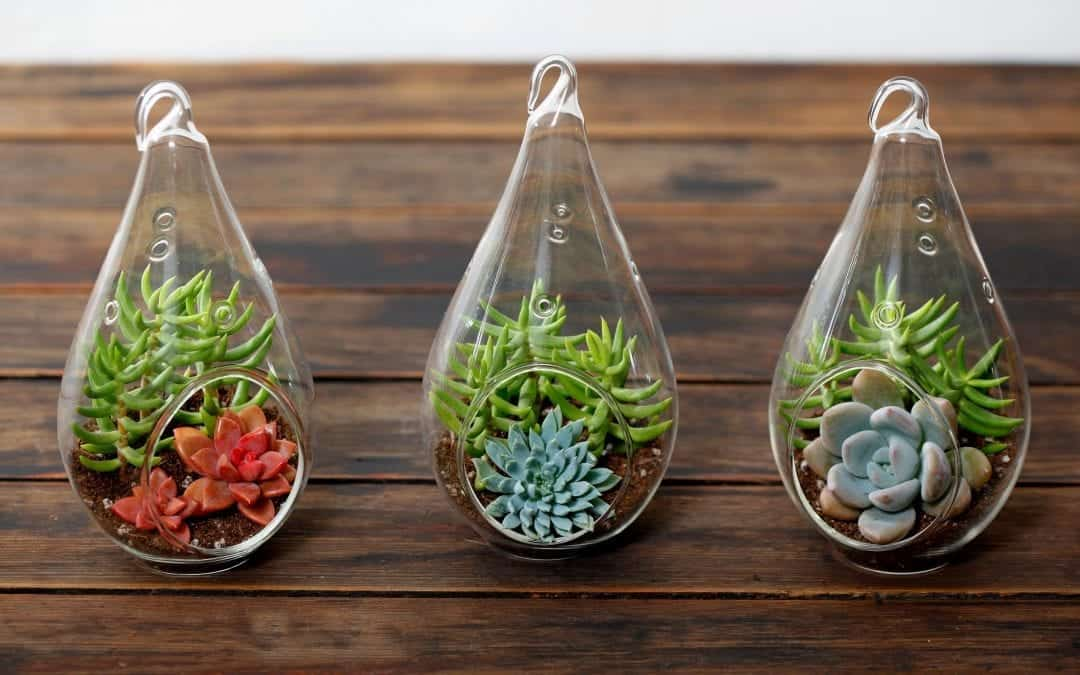 Getting the Hang of Your Hanging Terrarium