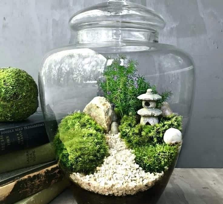 Choosing the Best Terrarium Container