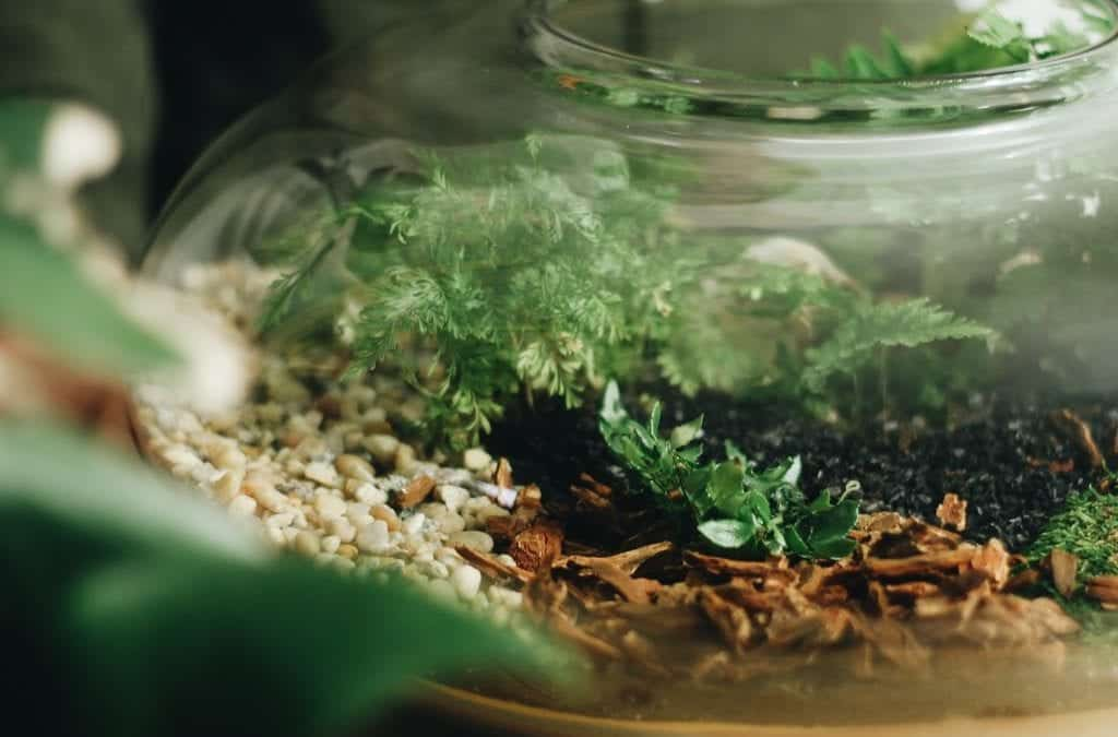 A Complete Guide to DIY Terrariums