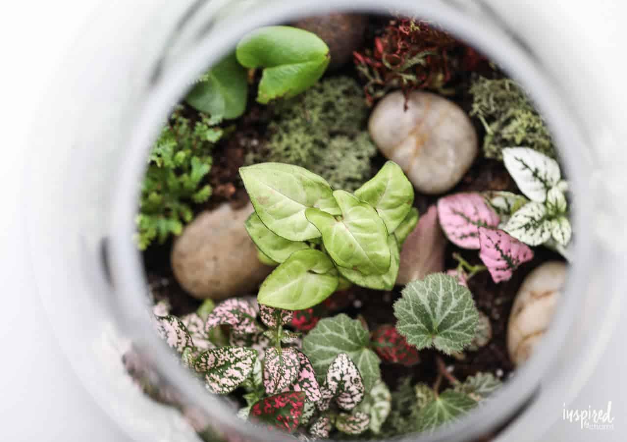 custom terrarium plants