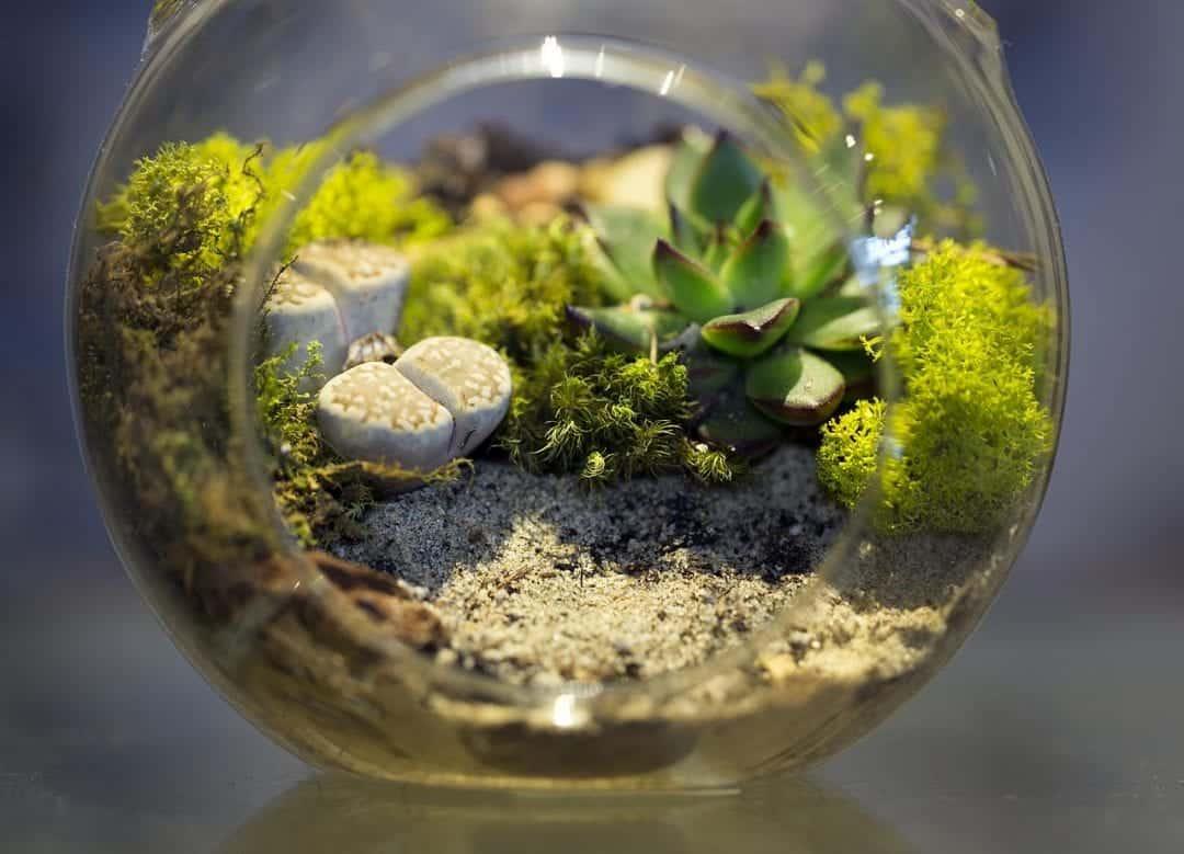 caring for a terrarium
