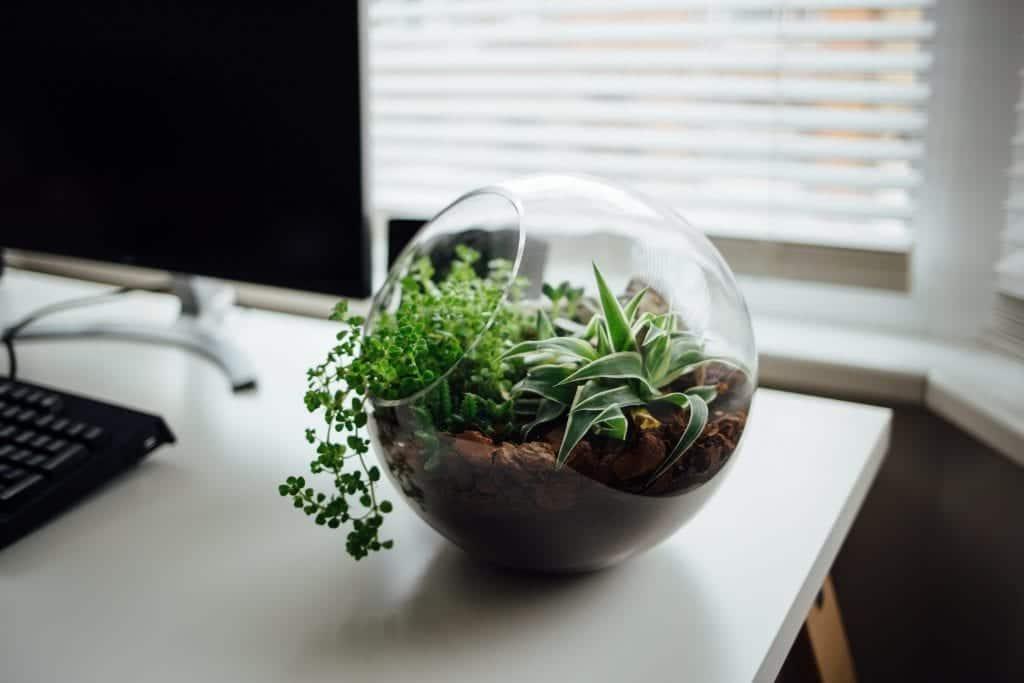 terrarium substrate