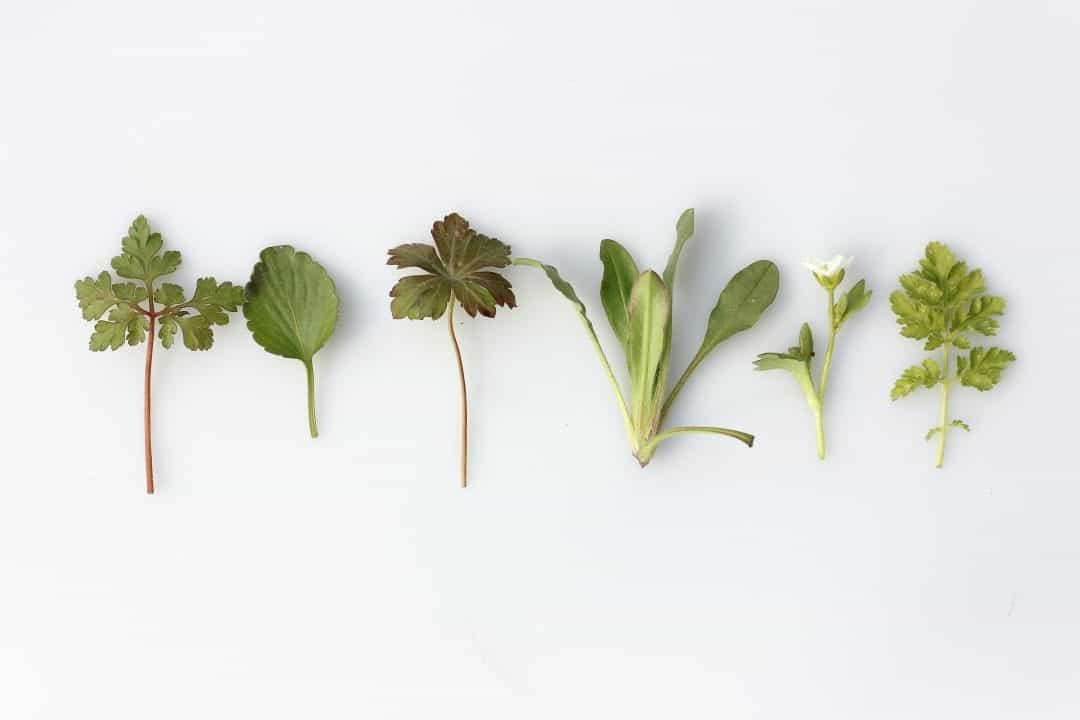 growing edible plants in a terrarium