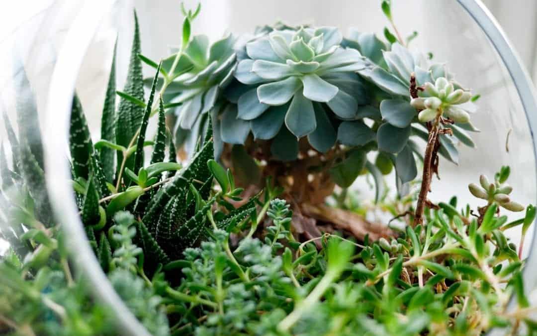 10 Easiest Edible Terrarium Plants to Grow