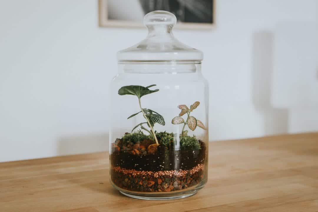 best closed terrarium plants