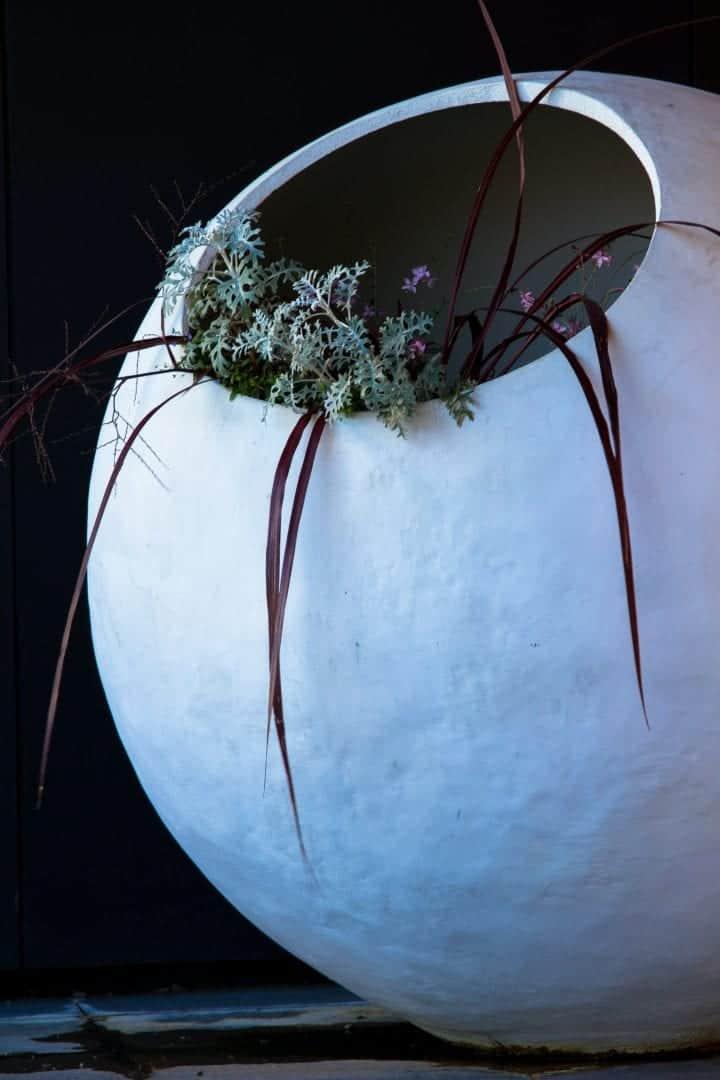 best edible terrarium plants