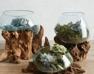 best terrarium molten glass driftwood