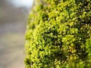 star moss terrarium diy
