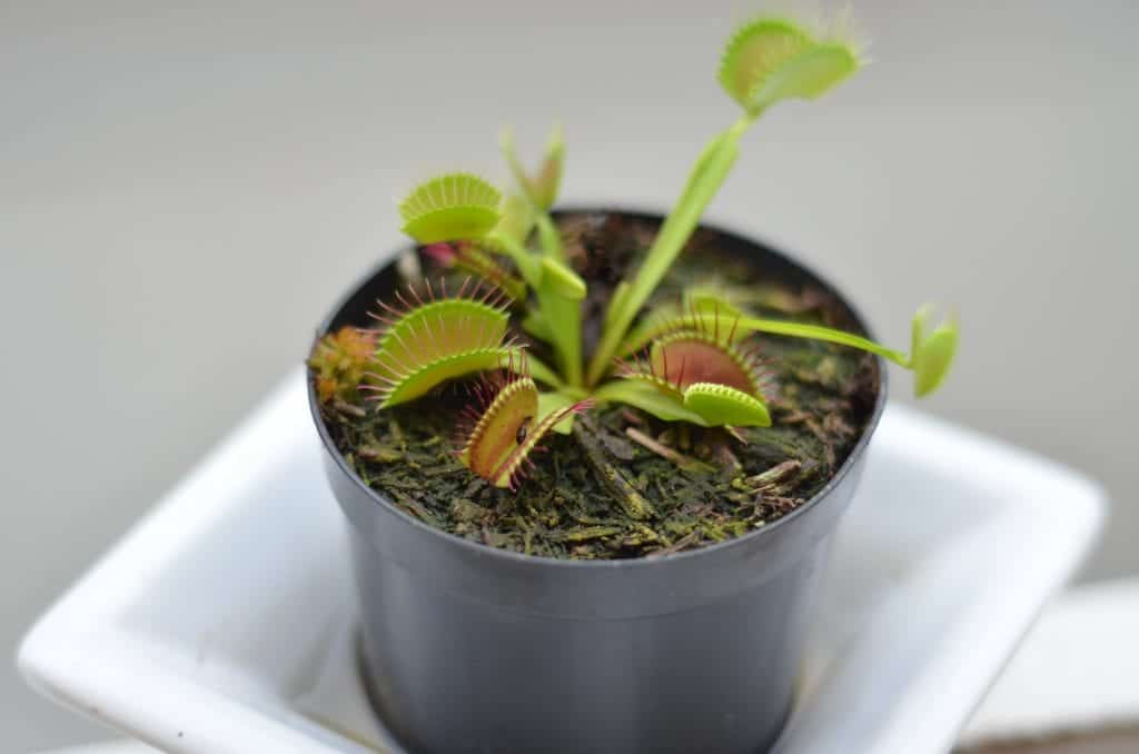 How to Create a Terrarium for Carnivorous Plants