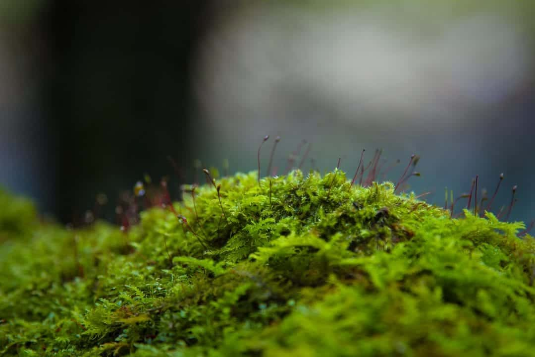 why moss terrariums