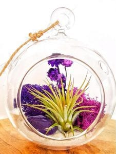 AURAMORE DIY Crystal Air Plant Terrarium Kit from Aura Creations