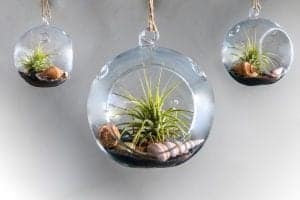 Hanging Air Plant Globe Terrarium Kit from Jacquies Aesthetics