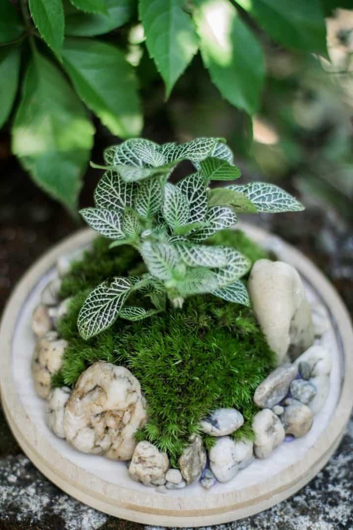 diy moss terrarium guide