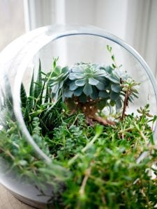terraium air plants for beginners