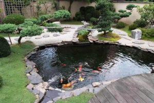 self-sustaining backyard tilapia pond