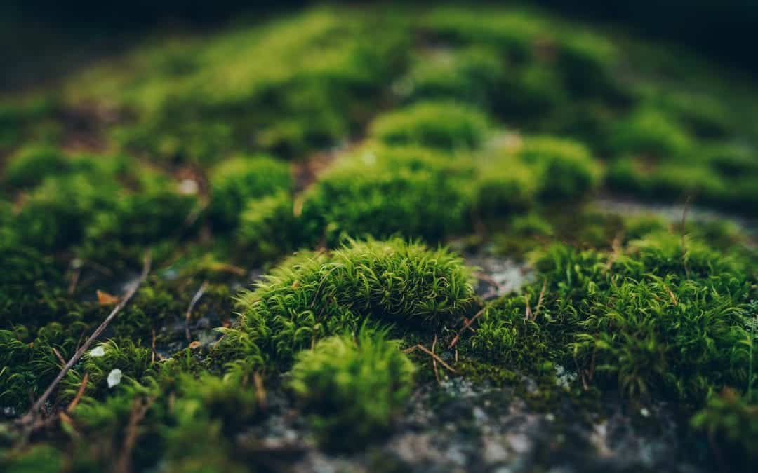 How to Make a DIY Moss Terrarium