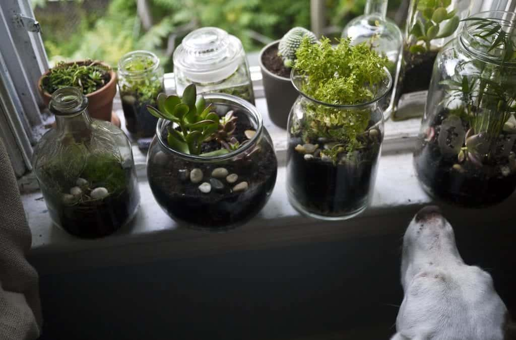 The 5 Best Places to Buy Terrarium Plants Online