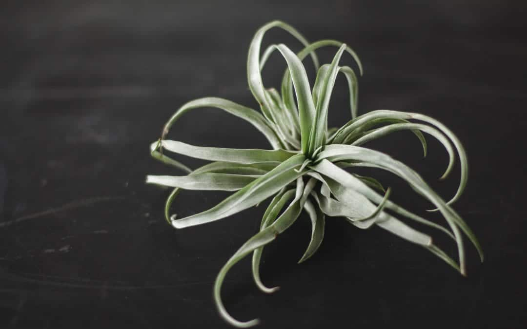 Top 3 Air Plant Terrarium Kits for Beginners