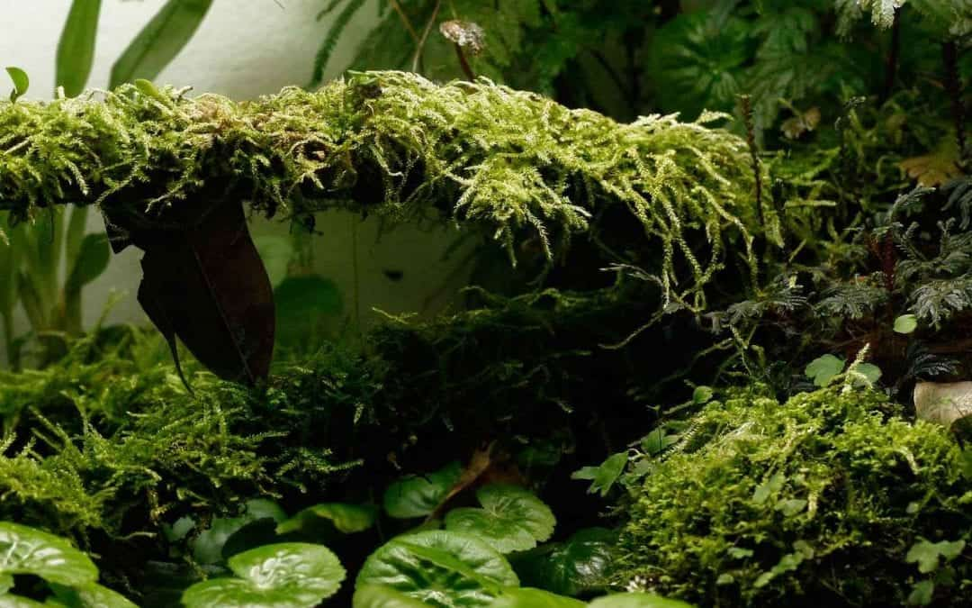How to Keep Humidity in a Glass Terrarium