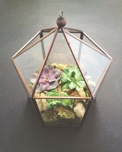 glass dome terrarium buyer's guide 2020