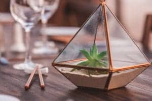 top glass dome terrariums 2020