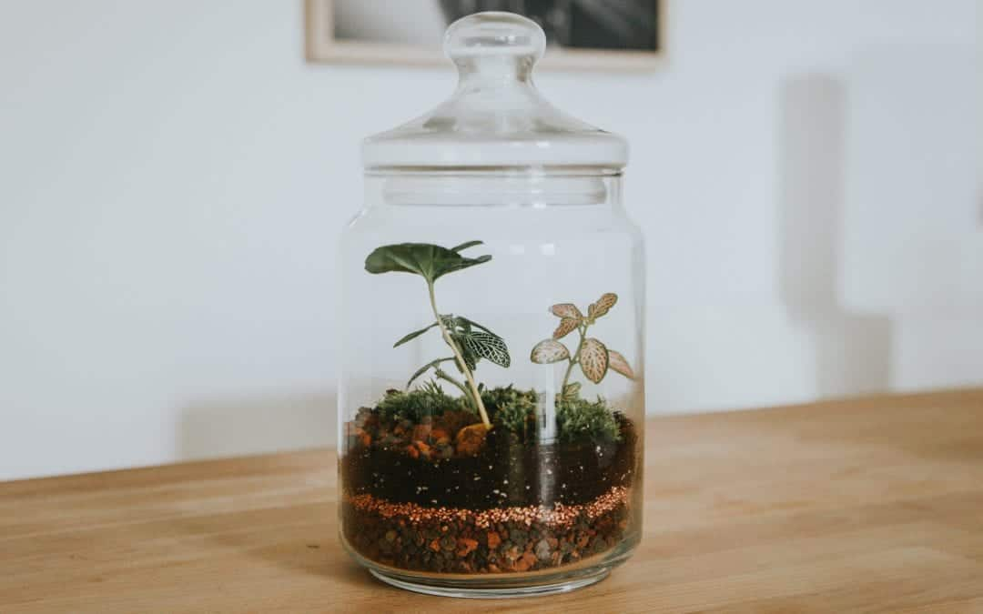 The 3 Best Glass Dome Terrariums