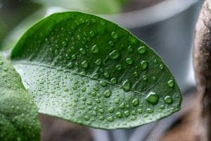 keep humidity in a terrarium tips