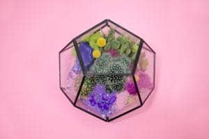 best glass dome terrariums