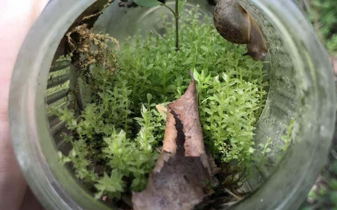 The 5 Best Snails for Jarrariums