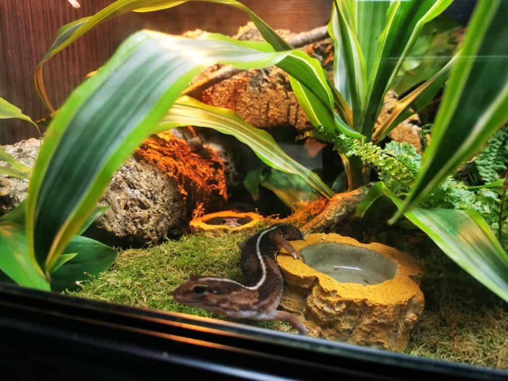 Are Bioactive Enclosures Good for Snakes?