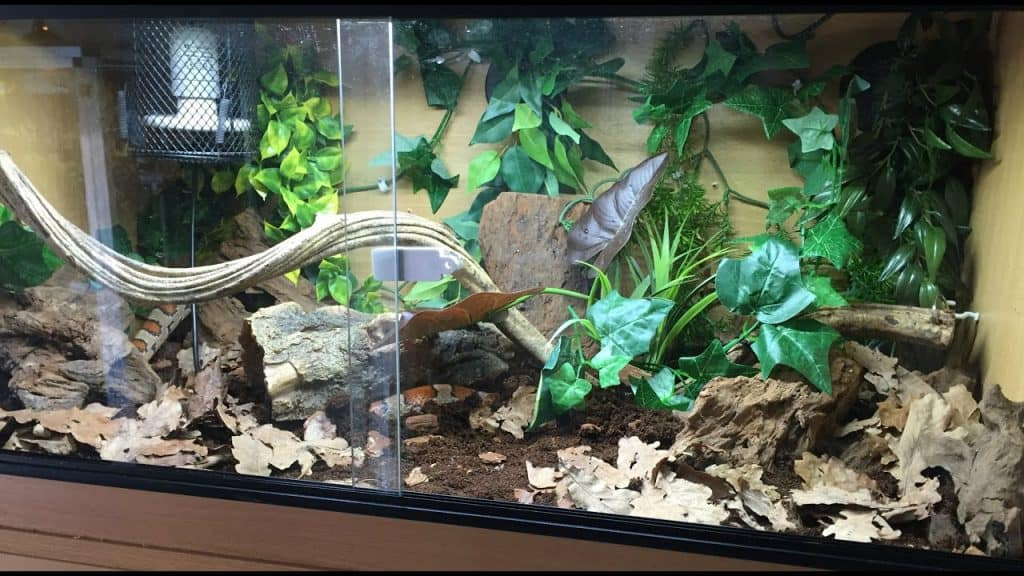 What is a Bioactive Snake Tank?