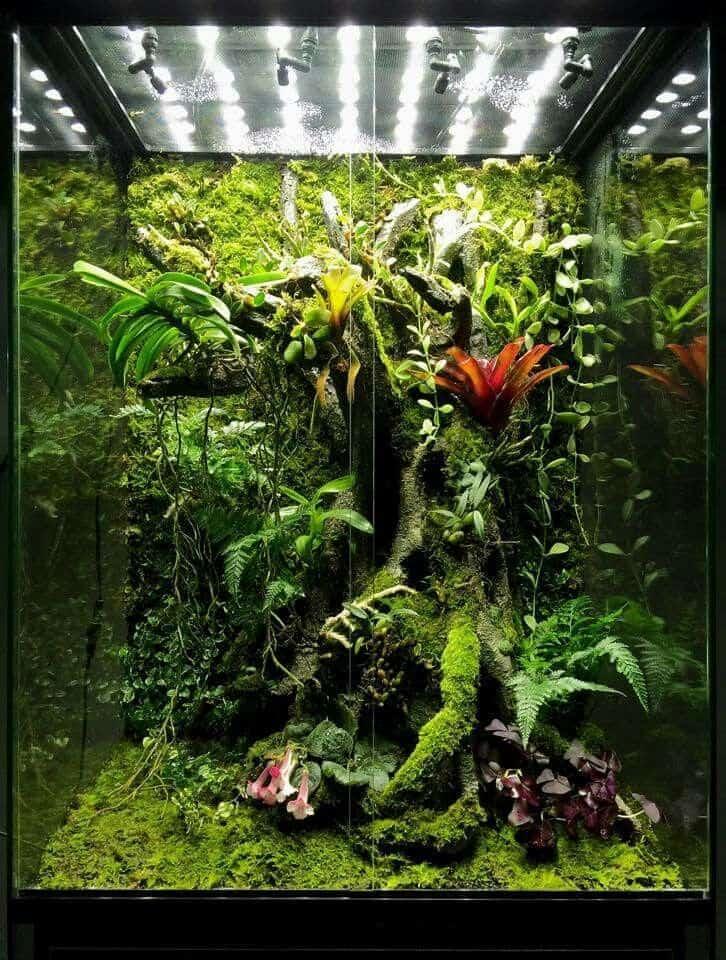Bioactive Vivarium for snakes