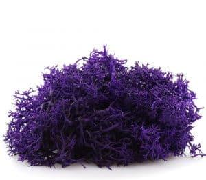 where to buy purple reindeer moss