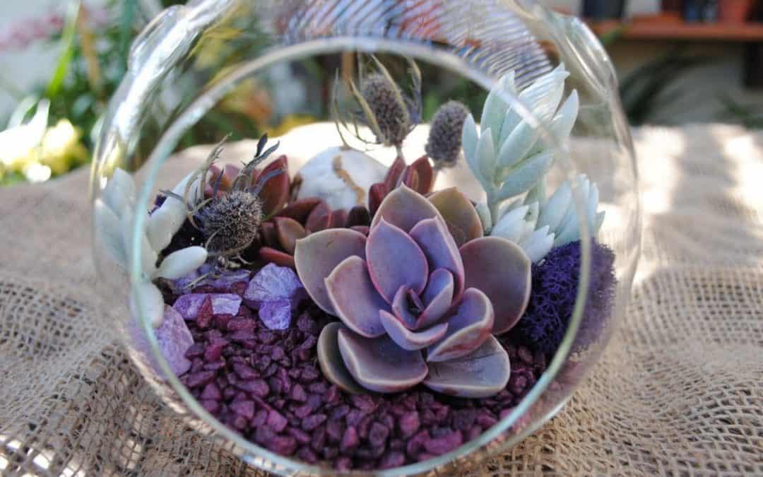 8 Picturesque Purple Terrarium Plants