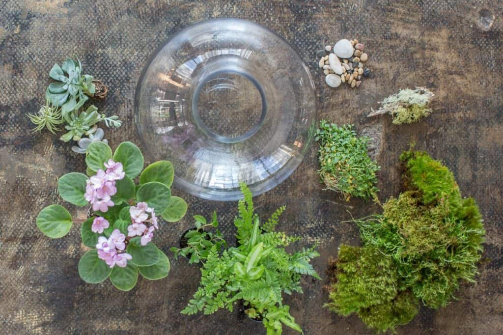 best Flowering Terrarium Plants