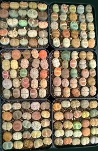 MicroLandscapeDesign Lithops review