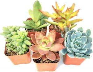 Plants for Pets Assorted Live Plants review