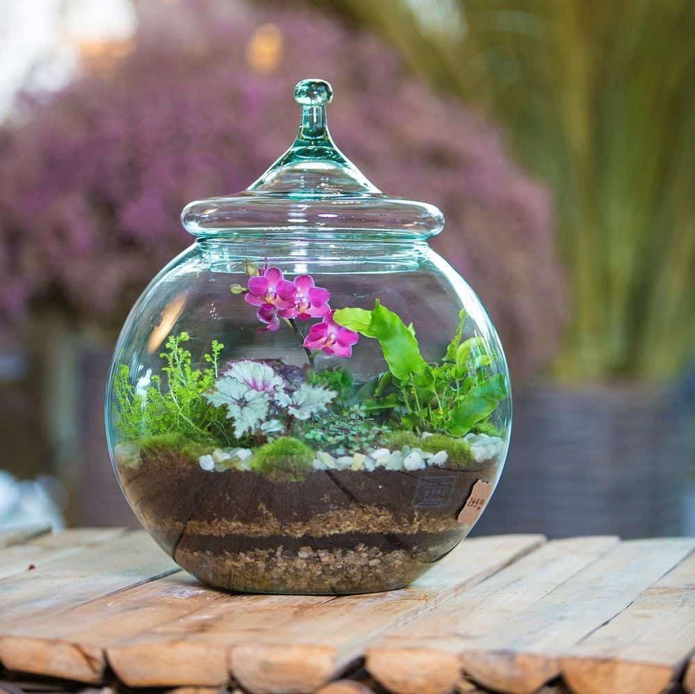 terraium plants flower