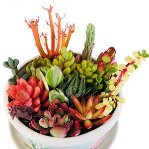 The Next Gardener Ten Assorted Plants review